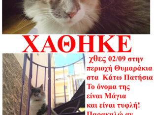 Χάθηκε χθες 02/09 από την περιοχή Θυμαράκια στα Κάτω Πατήσια! Το όνομα της είναι Μάγια και δεν έχει ματάκια, είναι τυφλή! Παρακαλώ αν τη δείτε, επικοινωνήστε! Γάτα- Αιγέως 46