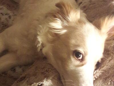 Χαρίζεται σκυλάκι για αυλη Σκύλος- Ωραιόκαστρο