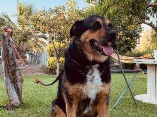 Χάθηκε ο σκύλος μας Σκύλος- Άγιος Μαμάς