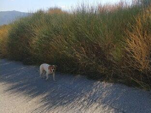 Σκύλος στην περιοχή Βαμβακιας Θεσσαλονίκης Σκύλος- Αρεθούσα