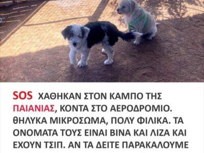 Χάθηκε η Βίνα και η Λίζα στην Παιανία Σκύλος- Παιανία