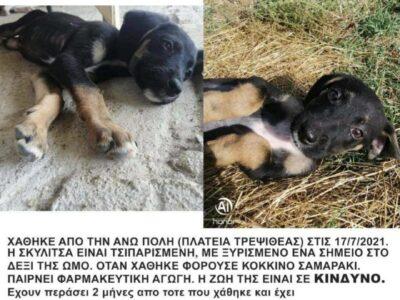 ΧΑΘΗΚΕ ΤΟΝ ΙΟΥΛΙΟ ΣΤΗΝ ΘΕΣΣΑΛΟΝΙΚΗ Σκύλος- Κομοτηνή